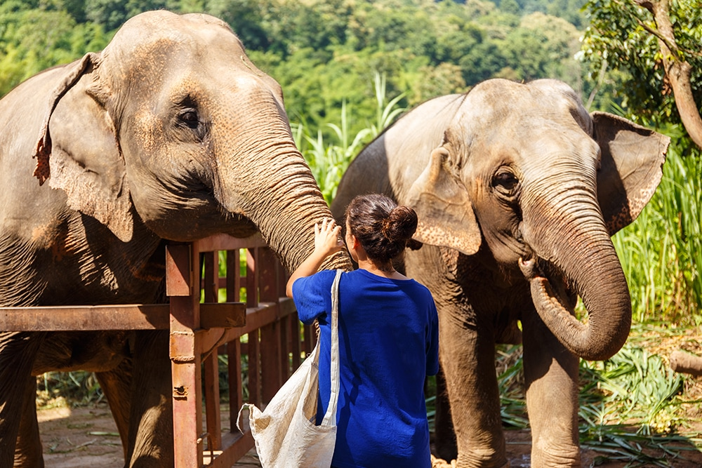 Koh Samui activities for families, things to do in Koh Samui with children